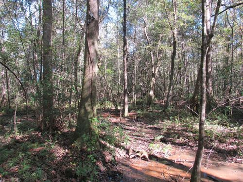 4-005 Cr-1 East Hunting And Timber : Jones : Autauga County : Alabama