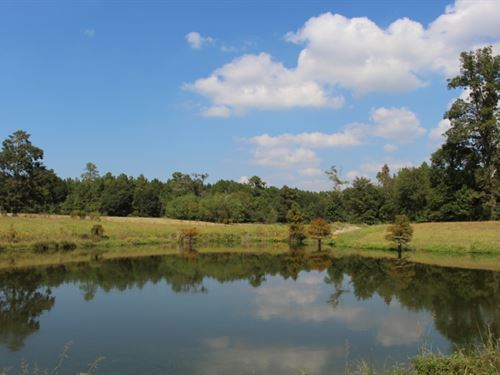 Sherrod Farm : Conroe : Montgomery County : Texas