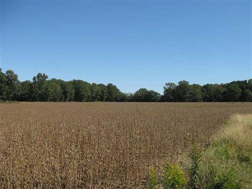 96 Acres of Irrigated Farmland : Colt : Saint Francis County : Arkansas