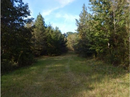 130 Acres In Rankin County : Piney Woods : Rankin County : Mississippi