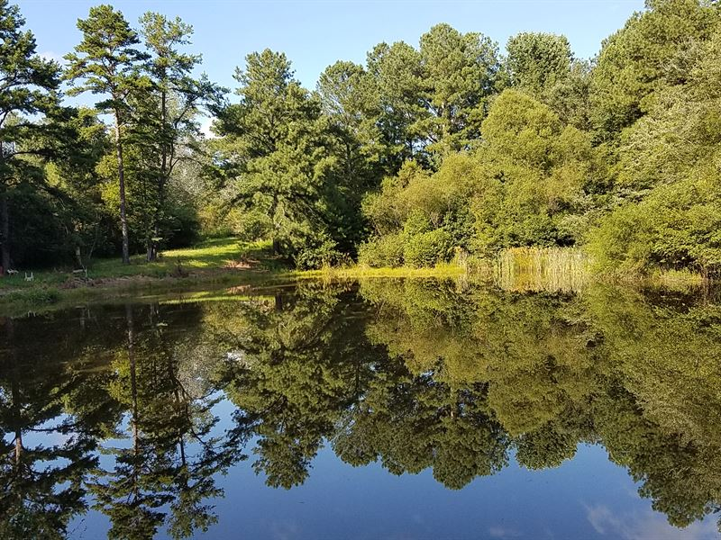 95+/- Acres Timberland : Woodland : Randolph County : Alabama
