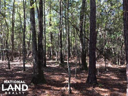 Springbank Timber And Recreation Tr : Millry : Washington County : Alabama