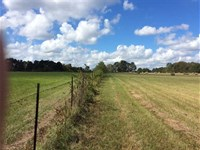 Goodman Branch Tract, Rapides Pari : Hineston : Rapides Parish : Louisiana