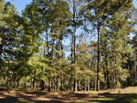 145 Ac Cr 211, Zavalla, Tx : Huntington : Angelina County : Texas