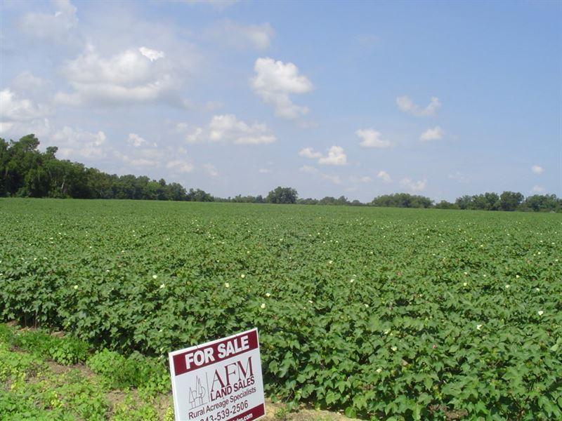 Blewer Tract : Orangeburg : Orangeburg County : South Carolina