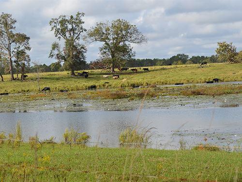 Fitzgerald Cattle Tract : Fitzgerald : Ben Hill County : Georgia