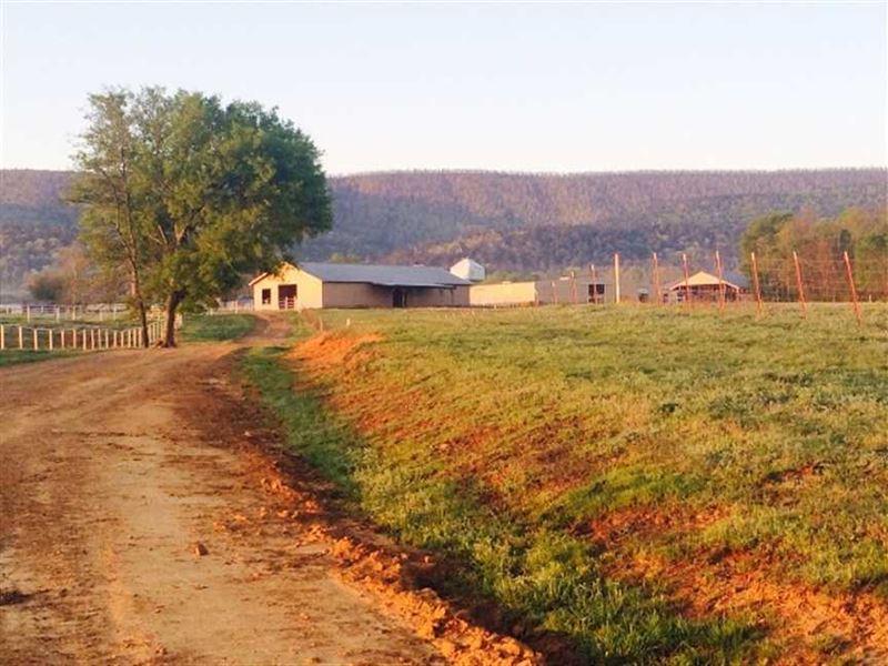 650 Acre Turn Key Cattle Farm : Danville : Yell County : Arkansas