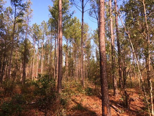 The Piney Wood Tract : Posey Crossroads : Autauga County : Alabama
