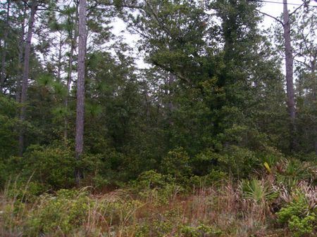 5 Acres  (a-268) : Keystone Heights : Clay County : Florida