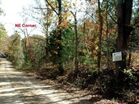 14.5 Acres, Raw Land With Electric : Manes : Wright County : Missouri