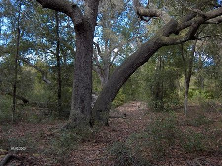 15.18 Acres On Paved Road (a-277) : Melrose : Putnam County : Florida