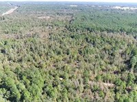 101 Acre Timber And Hunting Recrea : Laneville : Rusk County : Texas