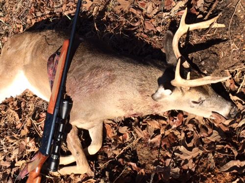Beautiful Hunting & Timber Land : Talladega : Jefferson County : Alabama