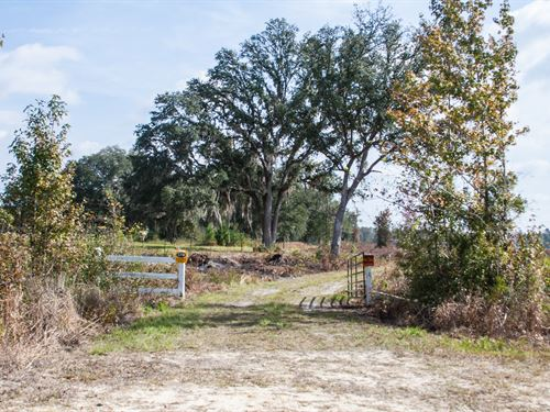 Hunting And Timber Investment : Monticello : Jefferson County : Florida