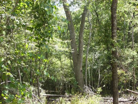 16 Acres River Frontage (a-163) : Worthington Springs : Union County : Florida
