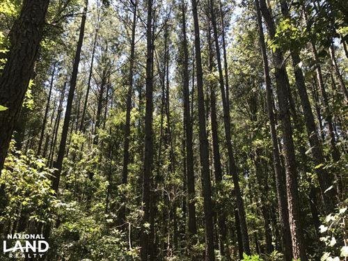 Ridgeland Sardis 22 Ac. Homesite/Re : Ridgeland : Jasper County : South Carolina