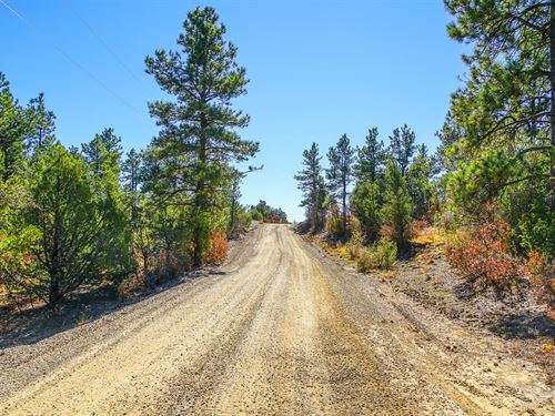Wooded Mountain Homesite With Power : Westson : Las Animas County : Colorado
