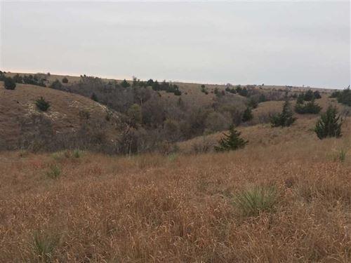 95 Acres of Thick Cedar Draws : Natoma : Rooks County : Kansas