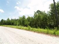 Mature Pines And Hardwoods : Newborn : Morgan County : Georgia