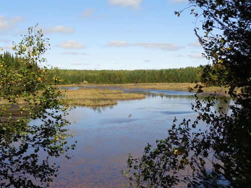 120 Acres Recreational Land : Minocqua : Oneida County : Wisconsin