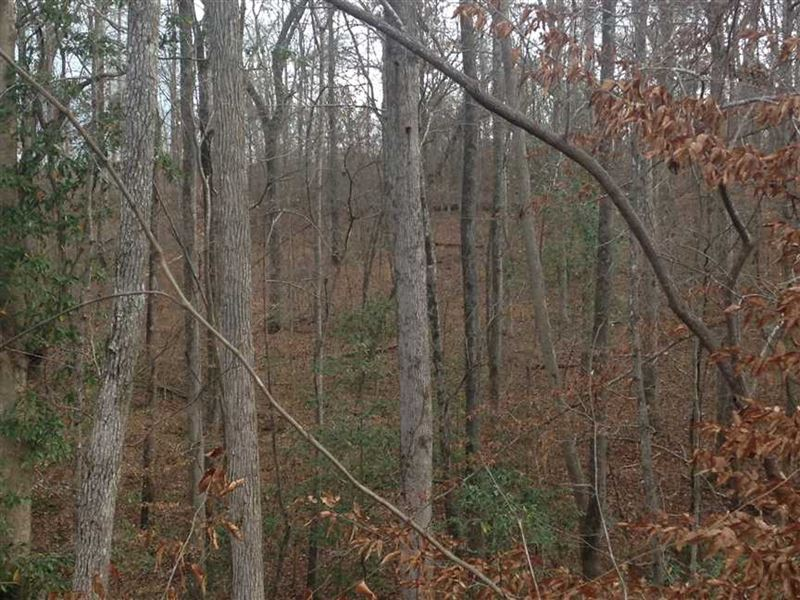 68 Acres With Building Sites : Hatley : Monroe County : Mississippi