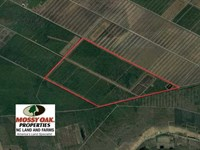 1025 Acres of Hunting Land For Sal : Fairfield : Hyde County : North Carolina