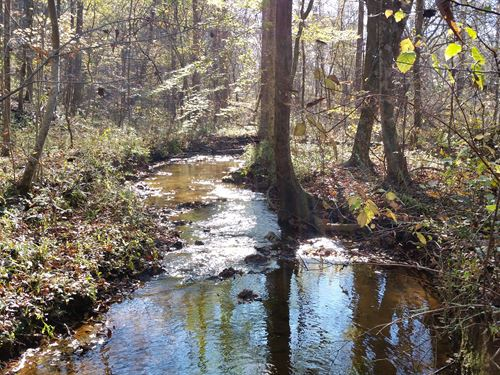12+/- Acres National Forest : Ashland : Clay County : Alabama