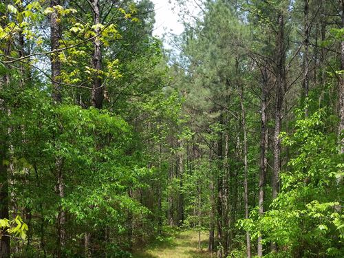 McCool Place - 162 Ac Attala County : Kosciusko : Attala County : Mississippi
