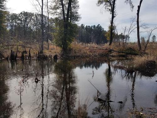 Deer And Duck Heaven : Cochran : Dodge County : Georgia