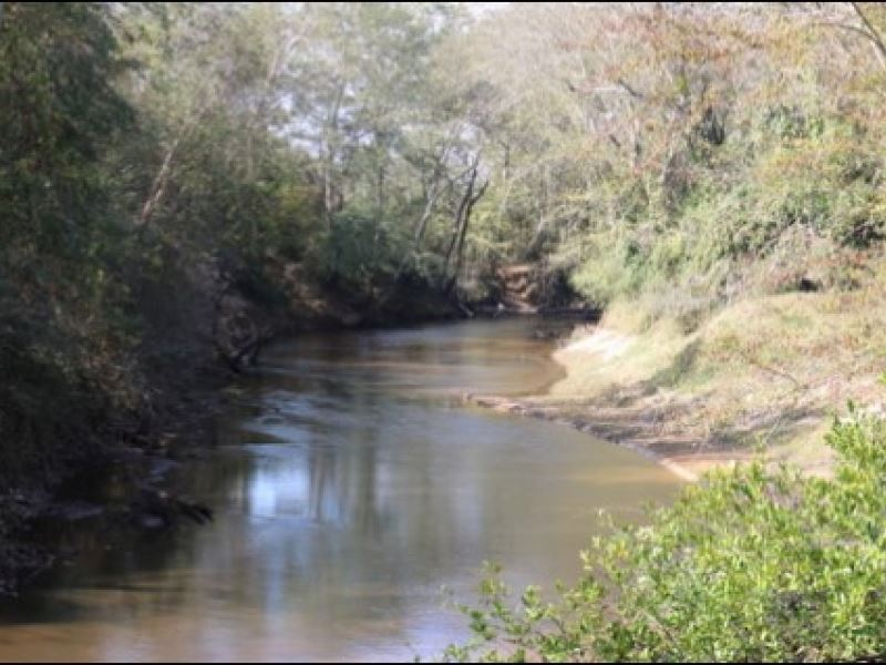 267 Acres In Newton County In Newto : Newton : Newton County : Mississippi