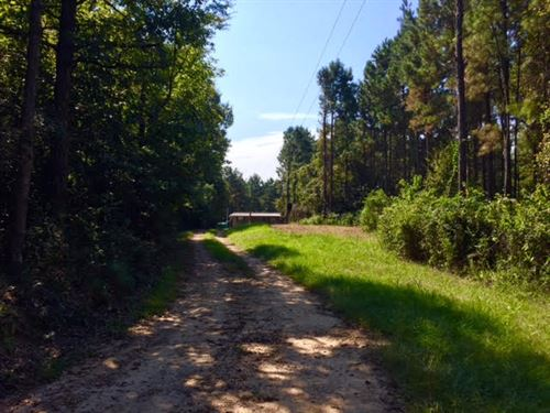 100 Acres On Smith Road : Woodville : Wilkinson County : Mississippi
