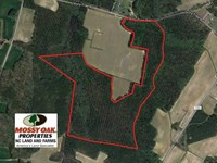 72 Acres of Hunting And Managed Ti : Pleasant Hill : Northampton County : North Carolina