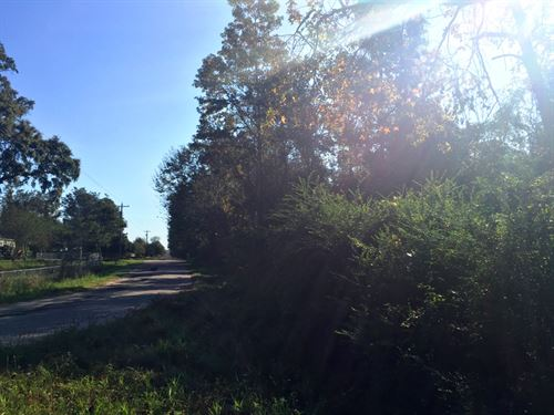 Cowpen Creek Tract : Canoe : Escambia County : Alabama