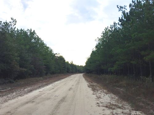 Pine Level Tract : Troy : Pike County : Alabama