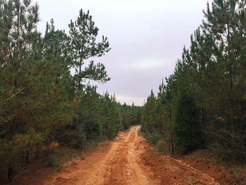 Whitewater Creek Tract : Elba : Coffee County : Alabama