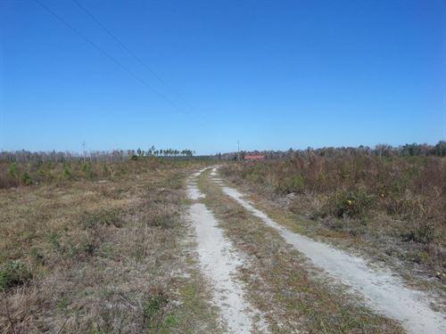 Beautiful Blueberry Farm/Timberland : Ludowici : Long County : Georgia