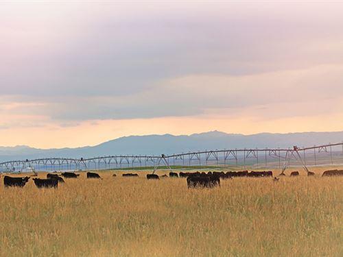 Dwyer Pivots : Wheatland : Platte County : Wyoming