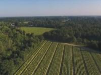 Beautiful Farm In Salemburg, Nc : Salemburg : Sampson County : North Carolina