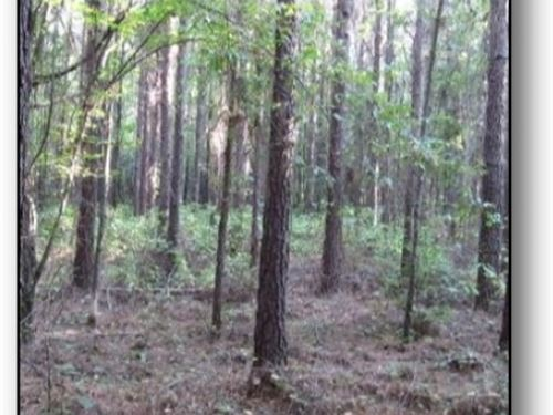 20 Acres In Webster County : Walthall : Webster County : Mississippi