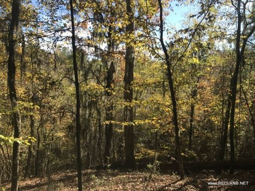 80 Ac - Timberland & Hunting Tr : Columbia Heights : Caldwell Parish : Louisiana