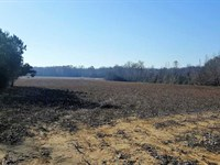 101 Ac Half Row Crop And Half Wood : Selmer : McNairy County : Tennessee
