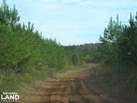 Hwy 120/Biggers Road Timber Tract : Buchanan : Haralson County : Georgia