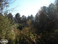 Potash Road Timber Tract 42.7 Acre : Cedartown : Polk County : Georgia