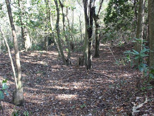 100 Acres In Jefferson Davis County : Bassfield : Jefferson Davis County : Mississippi