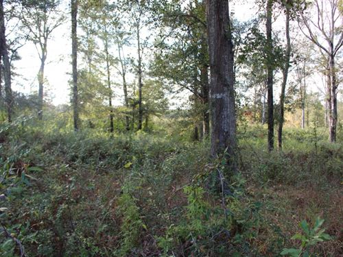 5.5 Acres In Pike County, Ms : McComb : Pike County : Mississippi