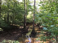 Cypress Bayou Tract, Jackson Paris : Quitman : Jackson Parish : Louisiana