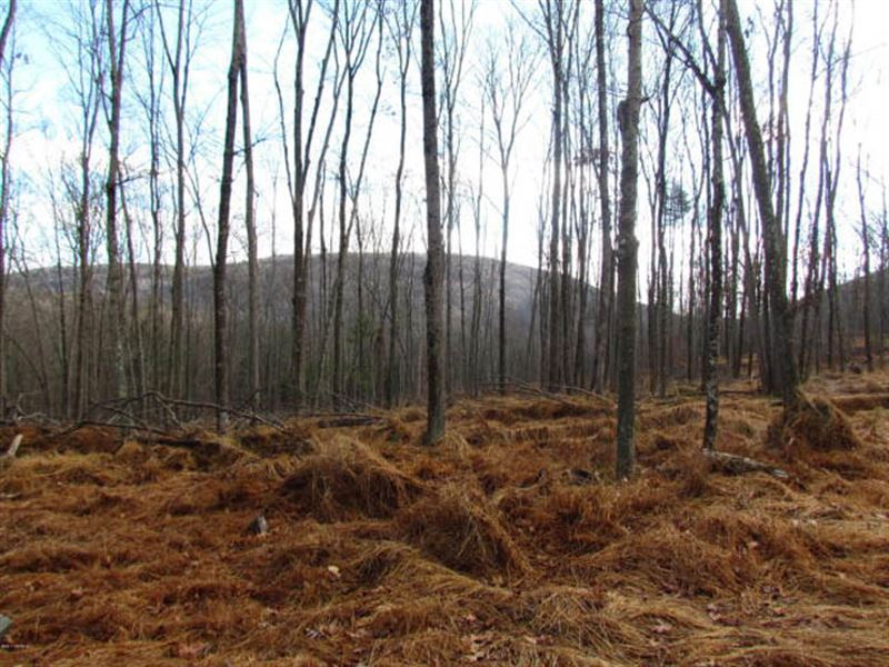32 +/- Acres Woodlands : Shickshinny : Luzerne County : Pennsylvania