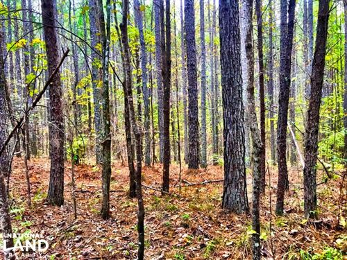Timberline Hunting Tract : Calera : Shelby County : Alabama