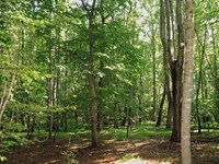 Rare 19 Acre Wooded Tract In Union : Union : Union County : South Carolina