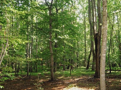 Rare 19 Acre Wooded Tract In Union : Union : South Carolina